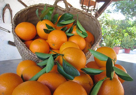 naranjas campo - almacen